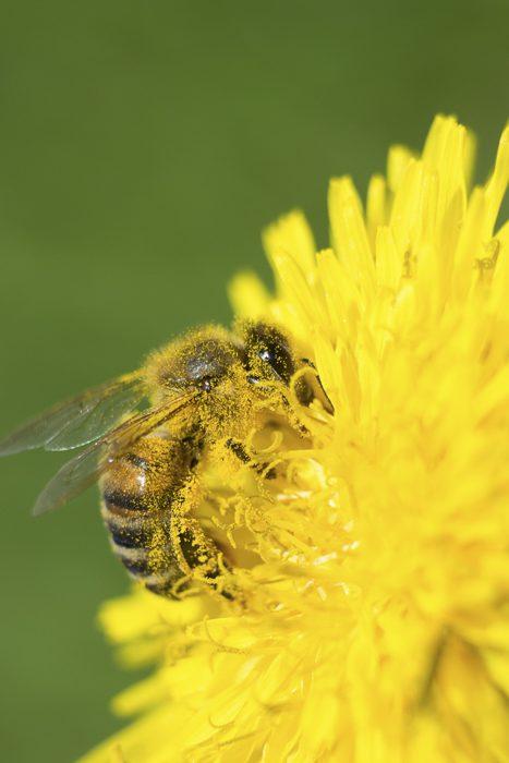 occhiale Hexa - ape su fiore